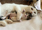 妈咪,天天抱着咪咪睡得可香啦